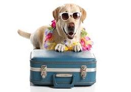 Holidaying Doggie